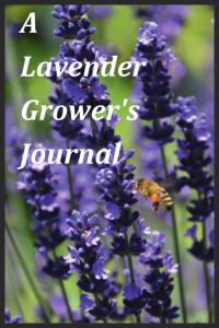A Lavender Grower's Journal